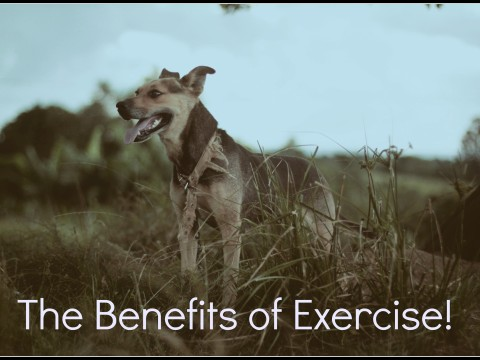 Benefits of Excercise